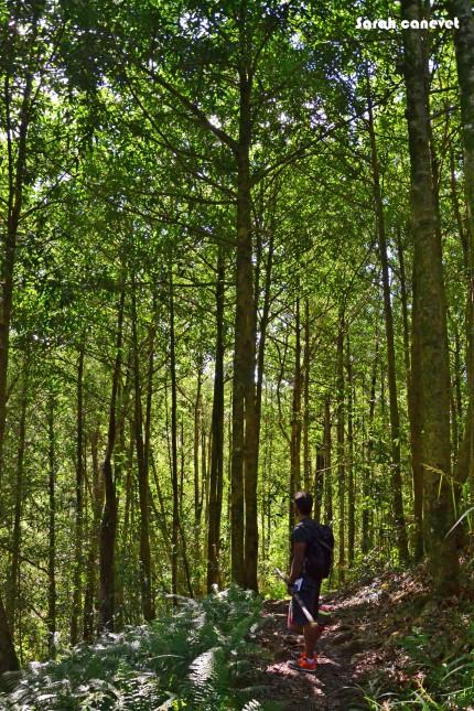 Forêt primaire des Bas, Cascade Pichon, Ile de la Reunion