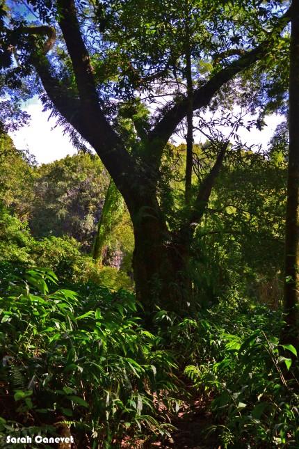 Sentier Cascade Pichon