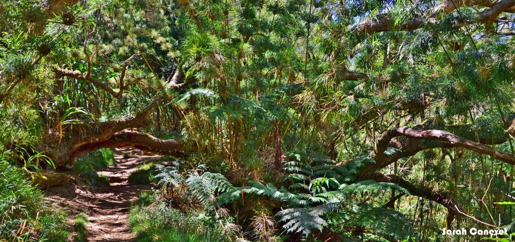 Forêt de Bois de Couleur
