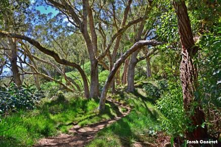 Forêt de Tamarin des Hauts