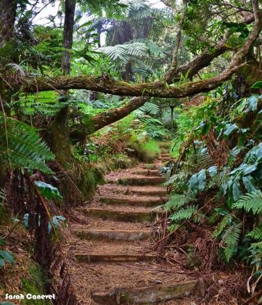 Sentier qui traverses la forêt de bois de couleur