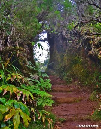 Sentier roche Ecrite