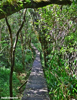 Sentier Randonnée Trou de Fer, Forêt de Bélouve